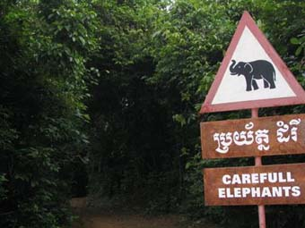 Careful Elephants